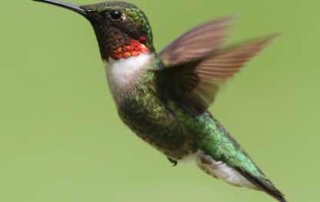 Hummingbird Strategy for Respectful Workplace