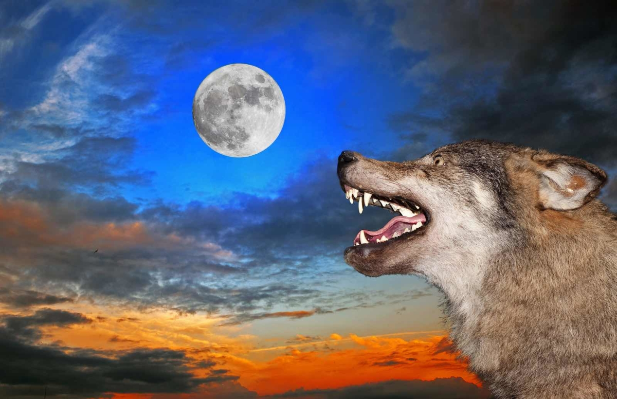 Wolves in the Workplace - SOCIAL IDENTITY THEORY
