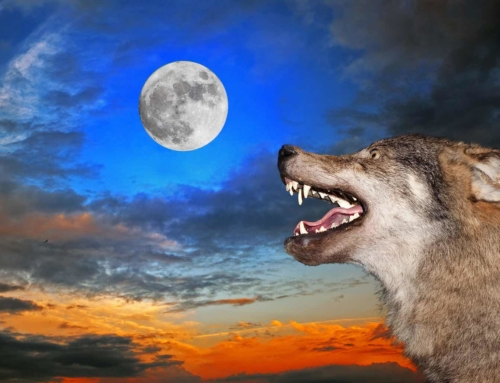Wolves in the Workplace – SOCIAL IDENTITY THEORY